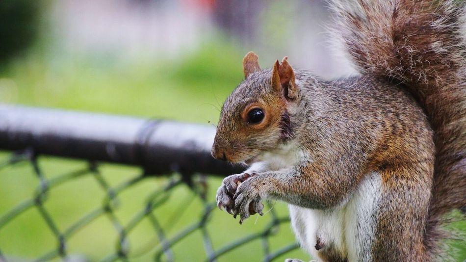 Beautiful stock photos of eichhörnchen, Alertness, Animal Themes, Close-Up, Day