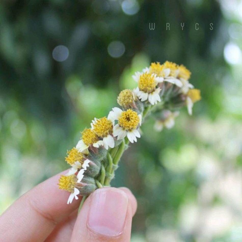 :) มงกุฎดอกไม้ กับ บางส่วนที่หายไป | By im Imimwrycs WRYCS
