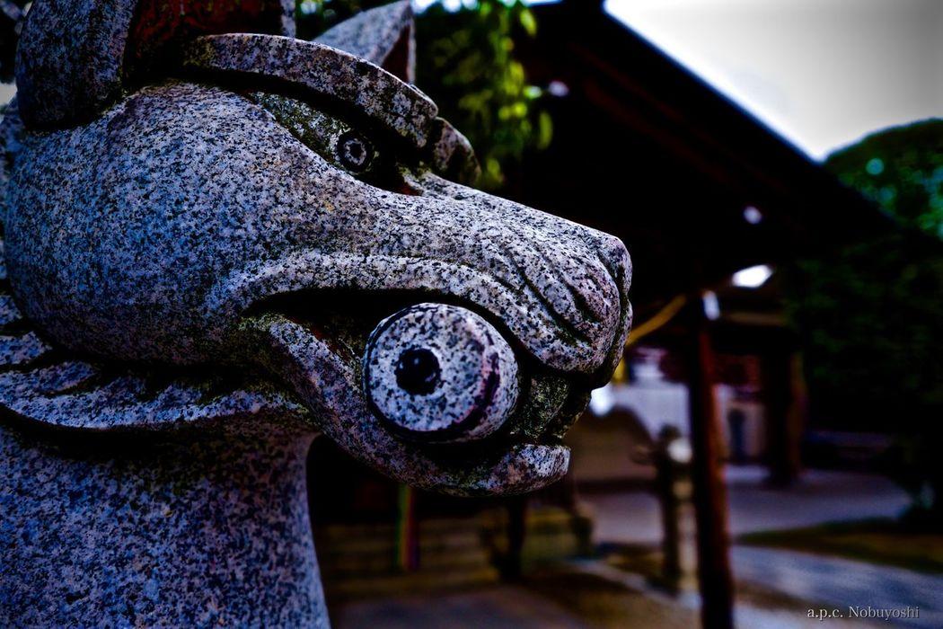komainu -狛犬- 福井 日本 Japan Fukui Fujifilm X-E2 XF14mmF2.8R 神社 Shinto Shrine