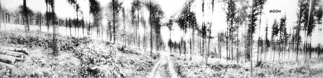 TreePorn What Lies Beyond... Black And White Trees Tadaa Community