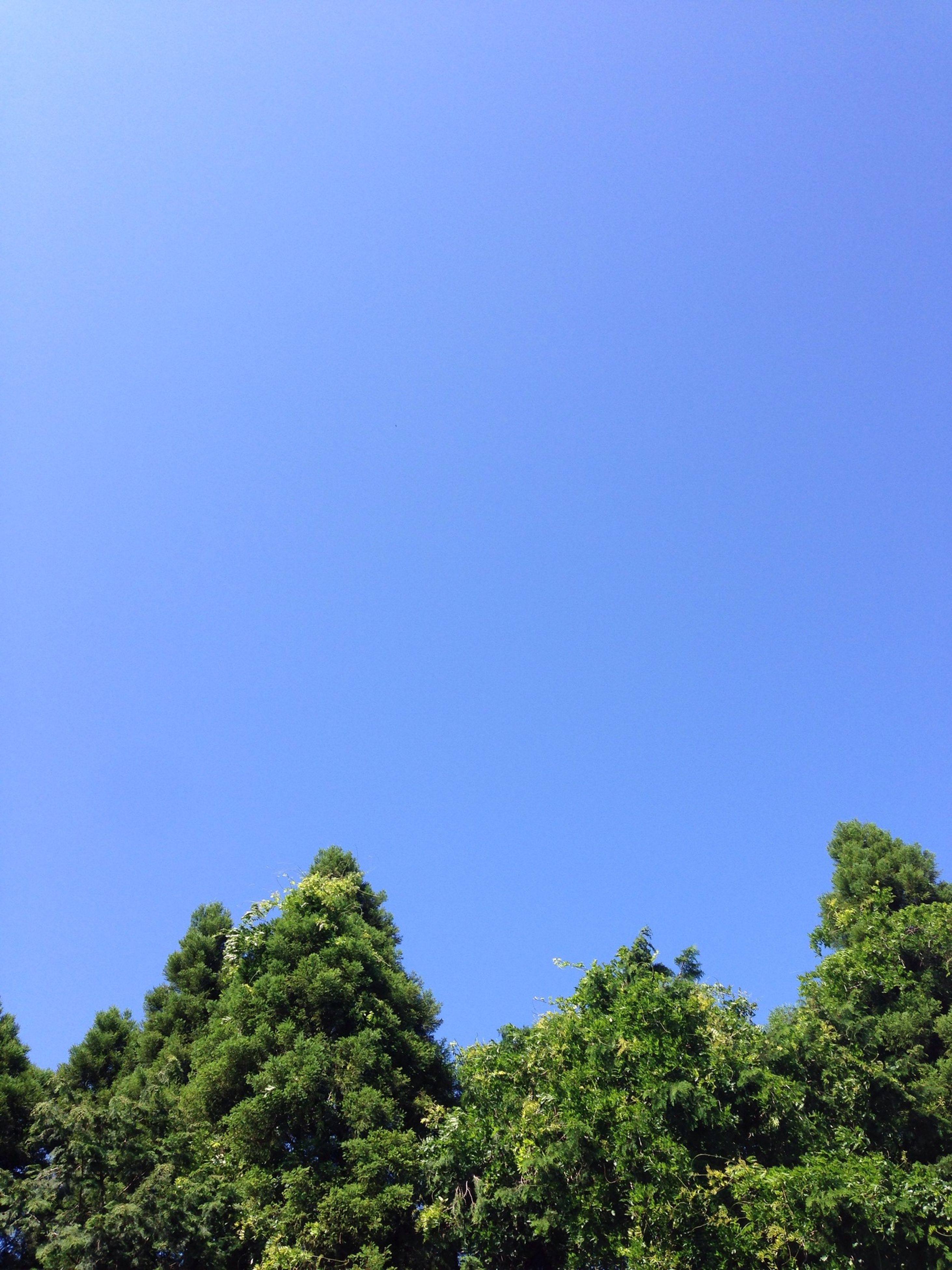 clear sky, copy space, blue, tree, low angle view, tranquility, growth, beauty in nature, tranquil scene, nature, scenics, green color, lush foliage, green, day, idyllic, outdoors, no people, forest, non-urban scene