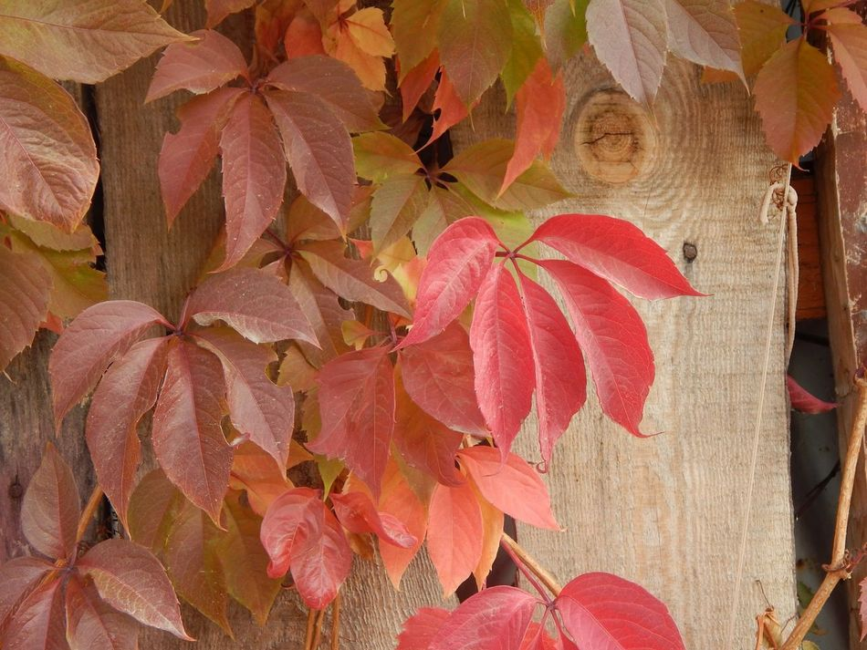 Beautifulthings EyeEm Autumn Colors Beautifulmoments Naturelovers Nature Photography Myview Hello World Autumn Beauty In Nature EyeEm Gallery