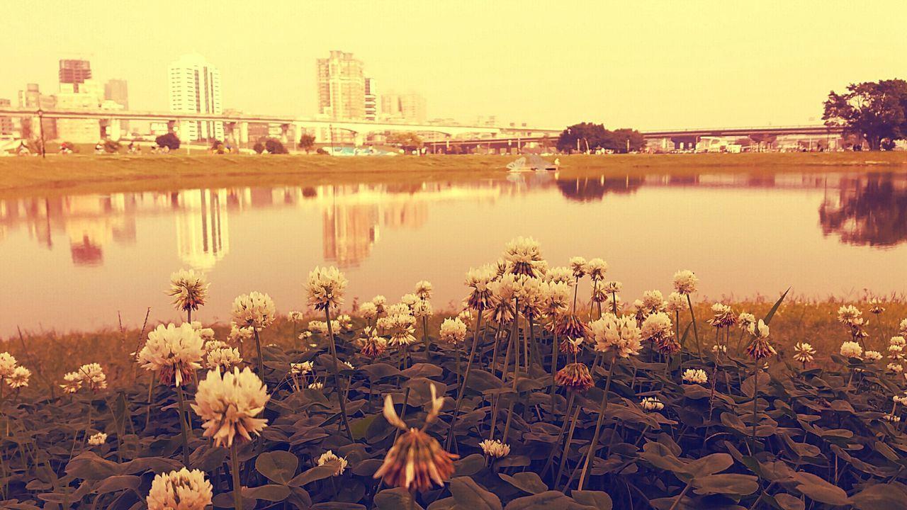 花 花朵 樹 建築物 はな スカイ☁⛅ Flowers River