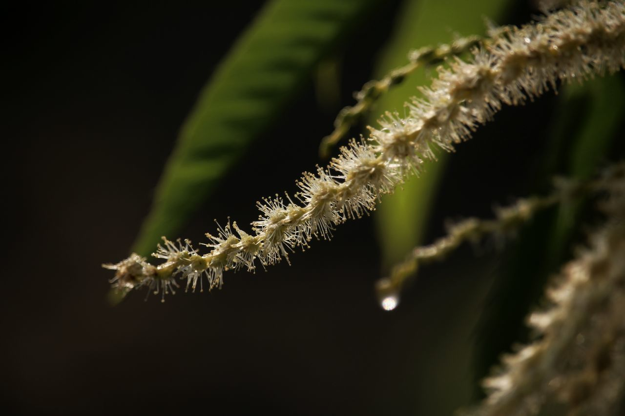 Close-Up Of Plant Growing At Night