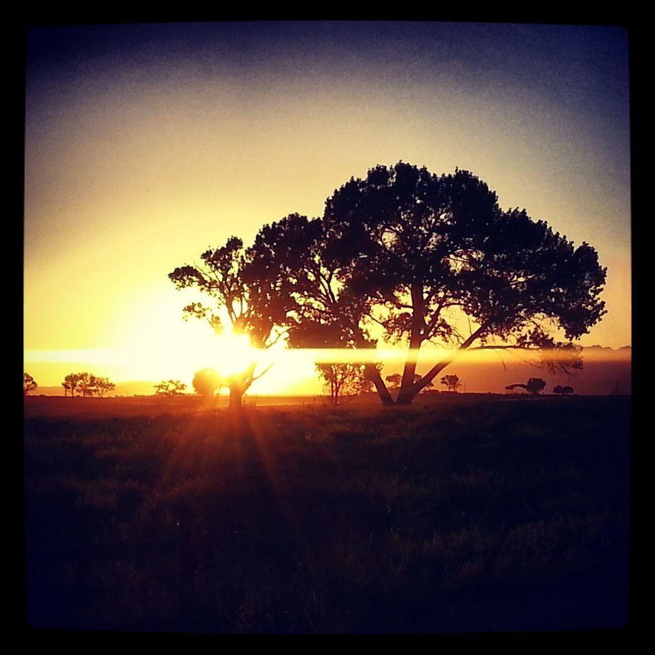near my grandmother's house =^;^= Hello World Colorado Sunsetlover Trees