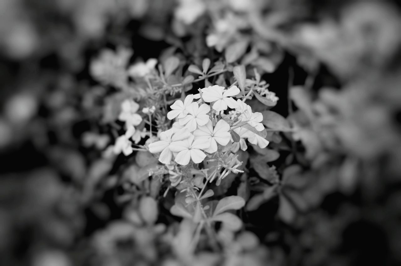 Flower Nature Beauty In Nature Freshness Growth Flower Head Fragility Springtime Plant Blossom Close-up Green Color Outdoors No People Tree Day Focus Object Blurredbackground Black And White Black And White Photography Black And White Collection