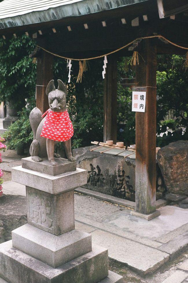 Japan Nagoya Oinarisan Oinari-sama Japanese Shrine Shinto Shrine Fox 大須観音に近い富士浅間神社