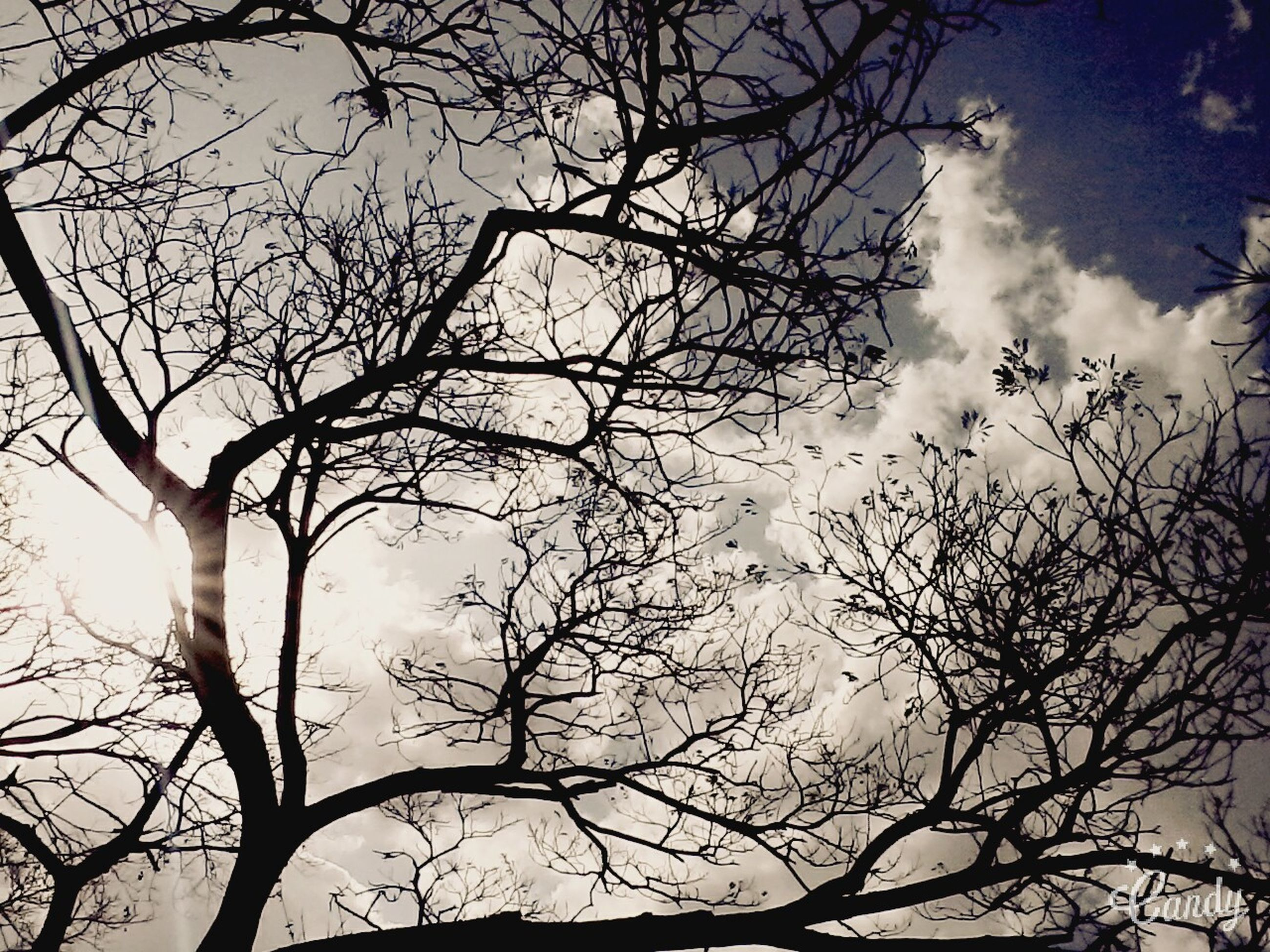 branch, bare tree, low angle view, tree, sky, silhouette, nature, beauty in nature, cloud - sky, tranquility, growth, scenics, outdoors, no people, day, cloud, dusk, tree trunk, cloudy, high section