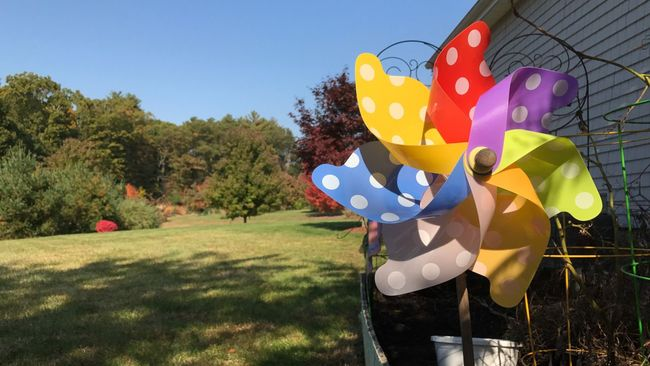 A quiet October day... Pinwheel Toy Tree Day Outdoors Nature Sky Blue