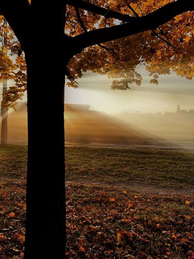 Autumn Nature Beauty In Nature No People Landscape Leaf Outdoors Sky Day