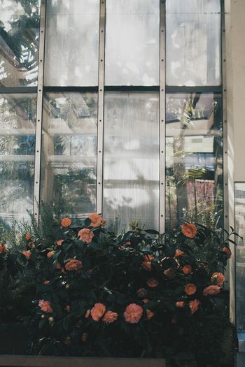 Window Growth No People Day Architecture Outdoors Nature Flower Sky Indoors  Glasshouse Botanics Botanical Garden Nature Tree Shootfilm Bloomingflowers Bloomed Blossom Time🌺 Captured Built Structure Building Exterior Close-up