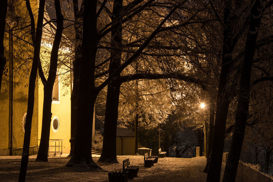 """""""silent winter night"""" Bare Tree Beauty In Nature Branch Cementary Church Forest Landscape Nature Night Night Night, Sleep Tight Nightshot No People Outdoors Scenics Silence Silence Of Nature Sillouette Silouette & Sky Snow Sunset Tranquil Scene Tranquility Tree Tree Area Tree Trunk"""