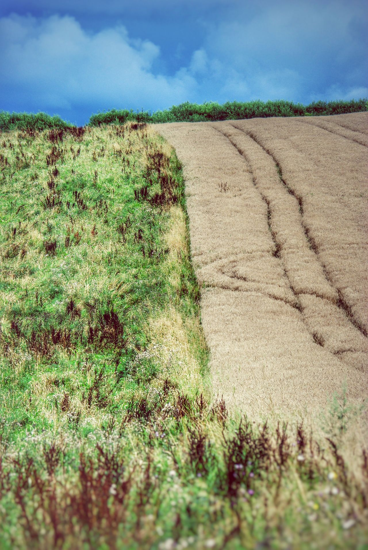 Fields Fieldscape Nature Pattern Grassfield Cornfield Tracks Hill Horizon Bluesky Landscape Landscapes With WhiteWall