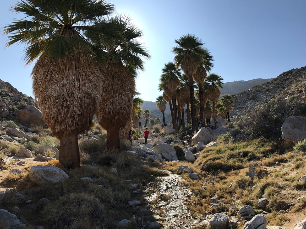 My children play in a desert oasis Oasis Palm Tree Palm Tree Nature Desert Anza Borrego Park View Hiking Anza Borrego State Park The Purist (no Edit, No Filter) Tadaa Community Landscape