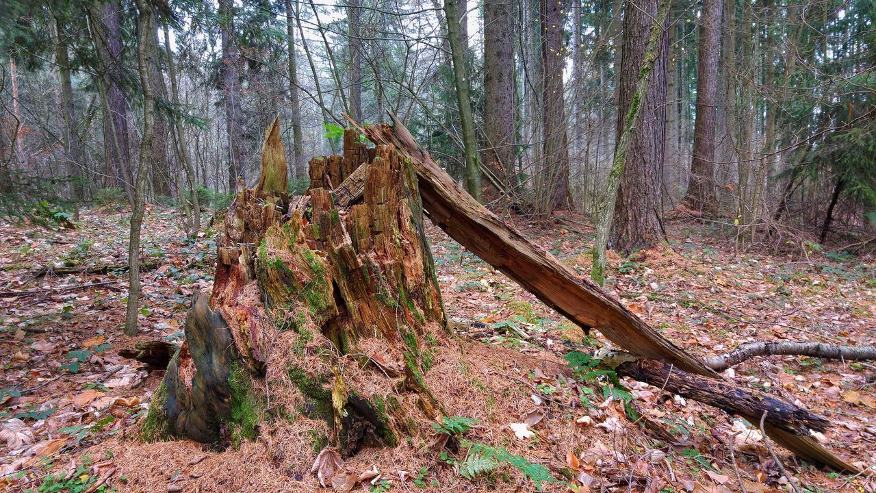 walk in German woodland WoodLand Beauty In Nature Branch Day Dead Tree Deforestation Forest Growth Leaf Log Nature No People Outdoors Pine Tree Scenics Thüringer Wald Tranquility Tree Tree Stump Tree Trunk Wood - Material WoodLand Woodland Walk