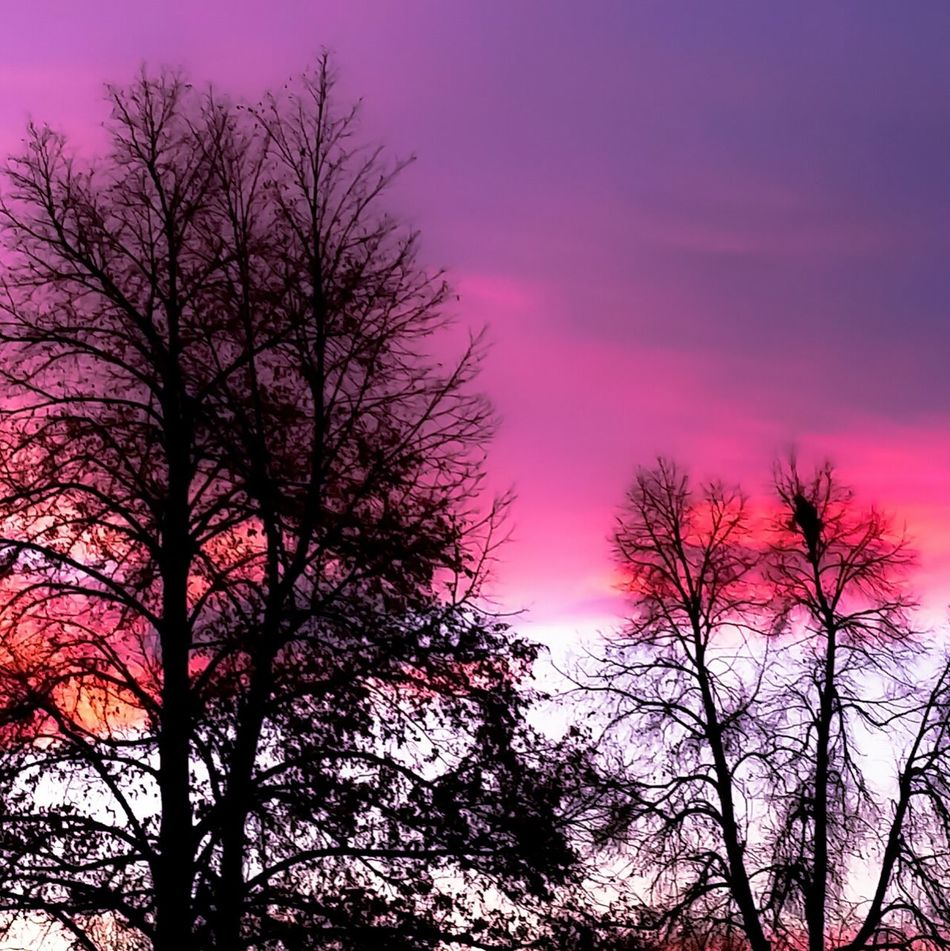 Tree Sunset Silhouette Sky Nature Romantic Sky Beauty In Nature Pink Color Dramatic Sky No People Treetop Branch Landscape Scenics Denvertography