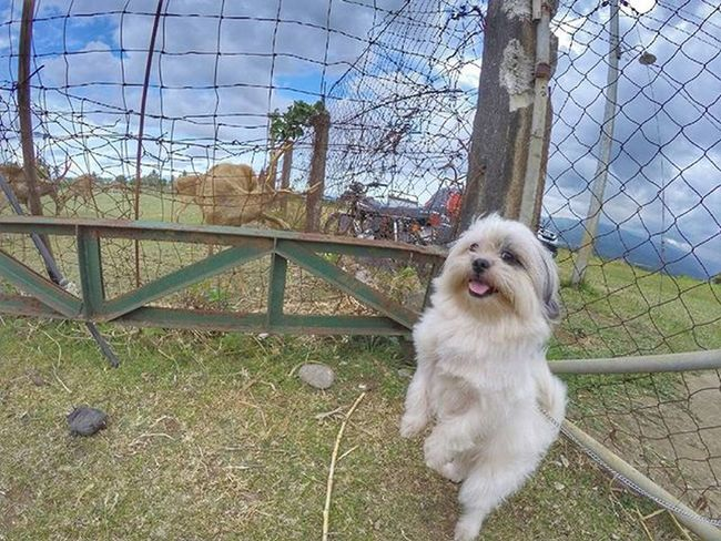 bawal daw po ako sa loob sabi ng bantay kaya sa labas lang daw ako. T.T Gopro Goprohero Goprooftheday Goproworld Goprophotography Gopro4 Gopro4silver Photooftheday Goproph  Goprouniverse Gopronation Goprophotooftheday Goprounited Goproasia Goprotography Travel Nature Goprolife Goprotravel Picoftheday Lovetogopro Gopromoment Beahero Hero4 Bestoftheday goprocaptures goproadventure