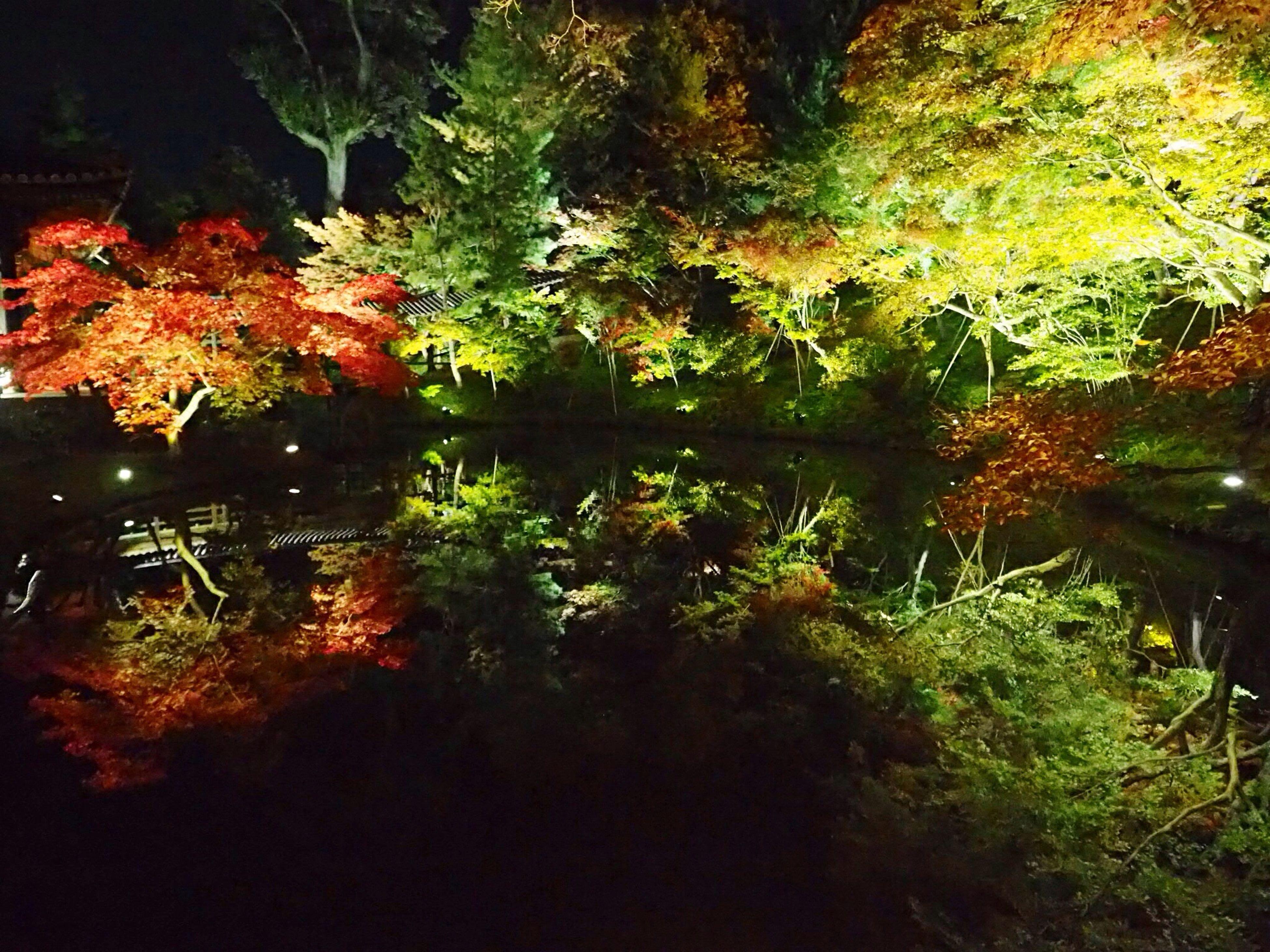 Kyoto Japan Kodaiji Ko-daiji Temple Koudaiji Higashiyama Lightup Night Garyouchi Pond Reflection Beautiful Autumn Autumn Colors Leaves Olympus PEN-F 京都 日本 高台寺 東山 臥龍池 紅葉 秋