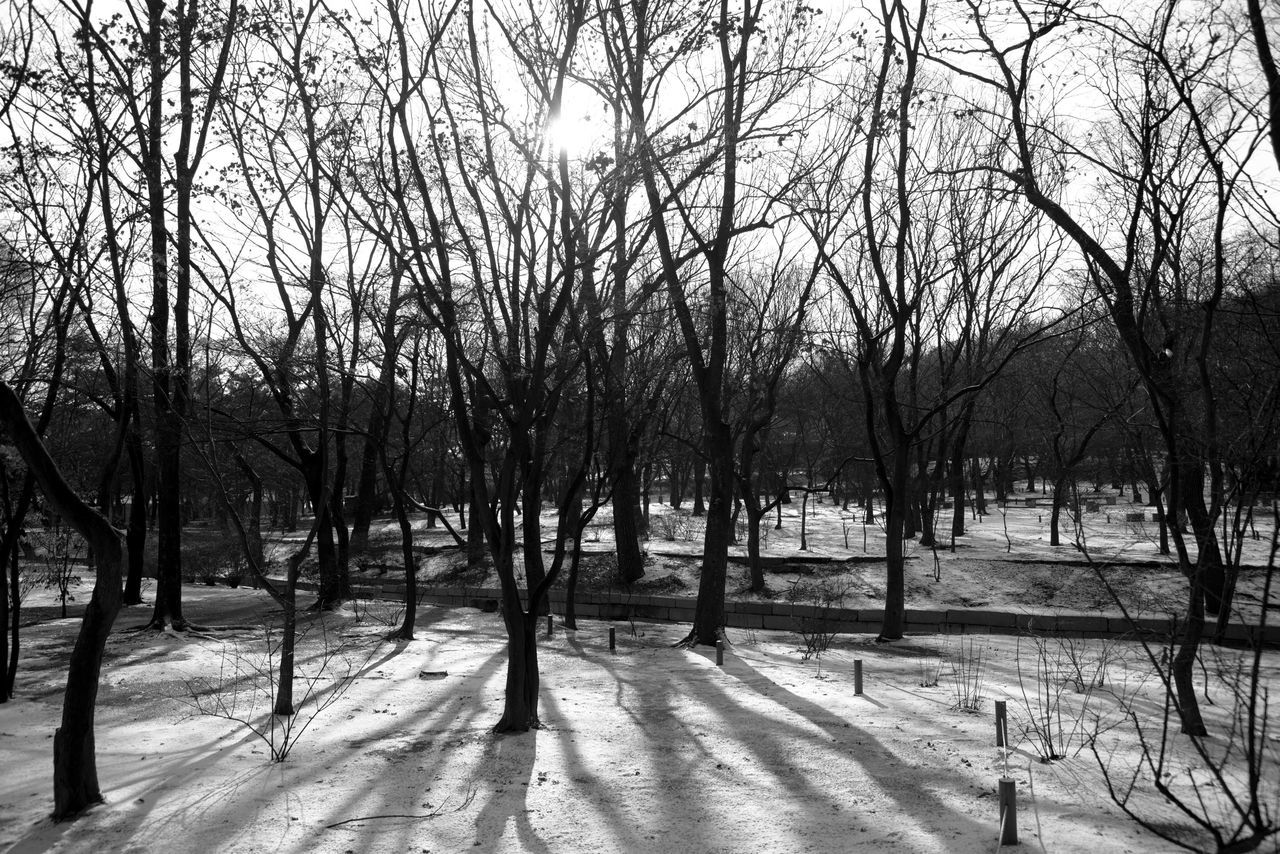 Tree Nature Bare Tree Winter Tranquility Snow Cold Temperature Outdoors Day No People Landscape Branch Beauty In Nature Scenics Sky Monochrome Black And White Shadows & Lights
