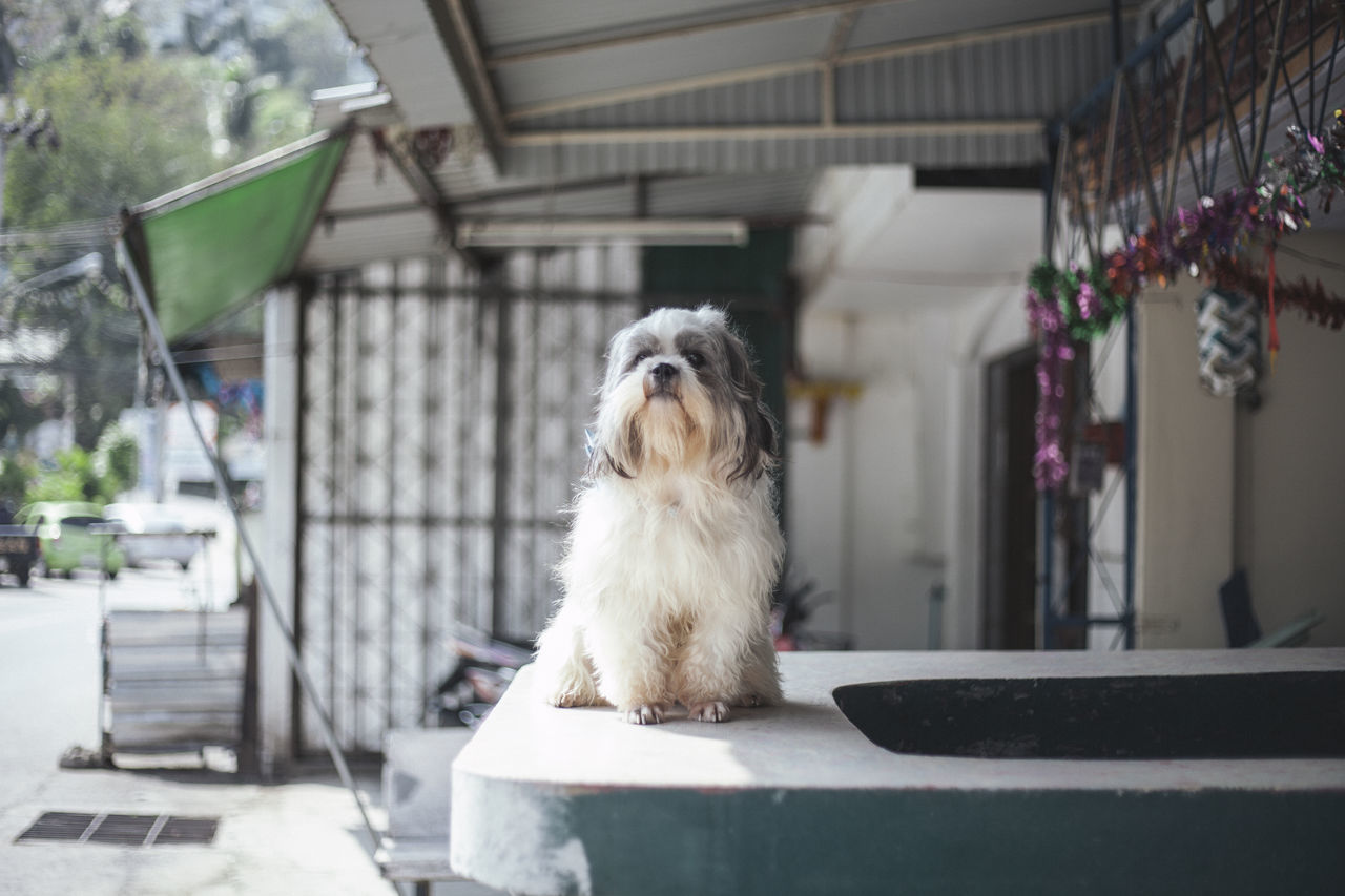 Beautiful stock photos of thailand, no people, day, indoors, animal themes