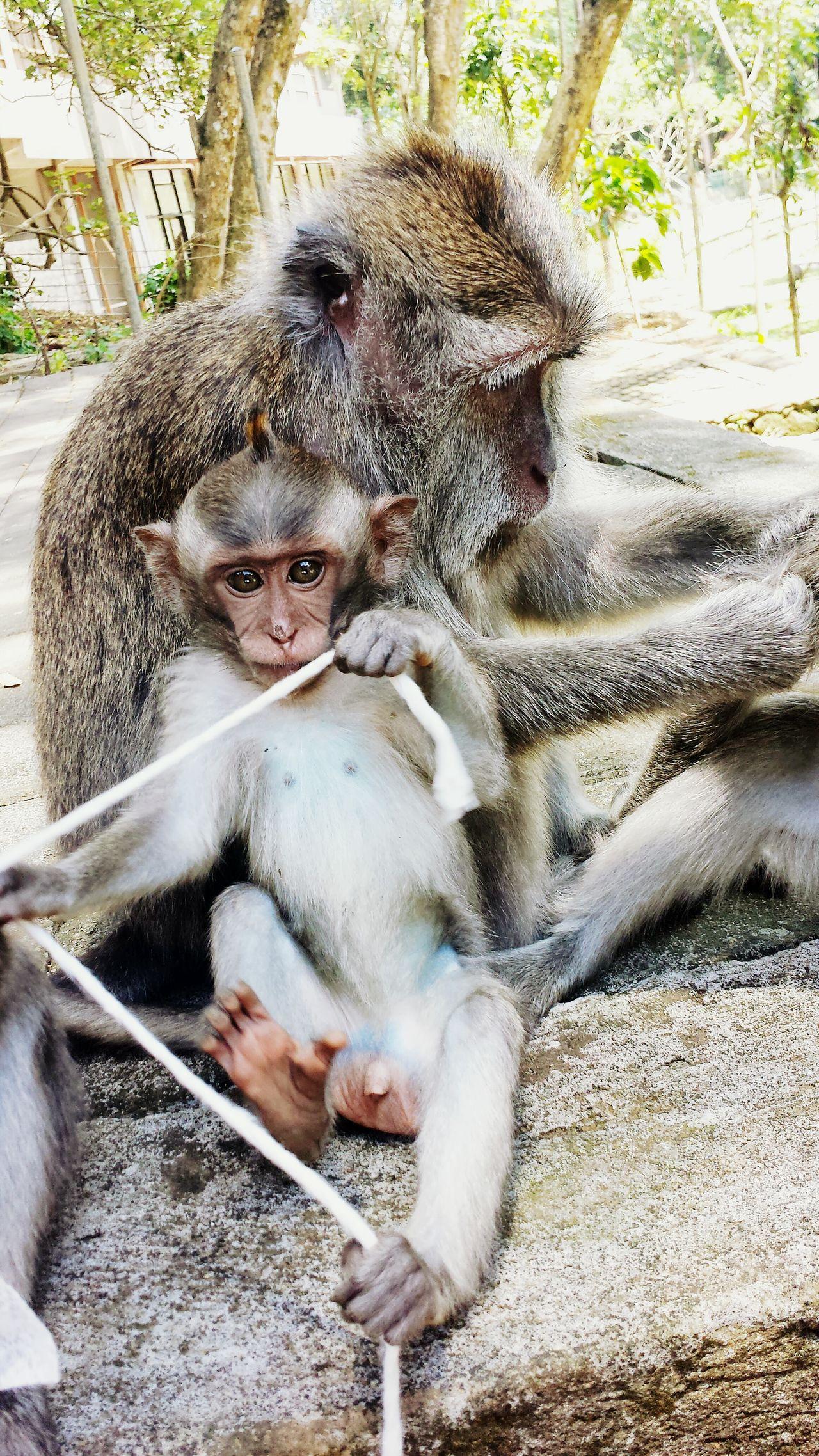 Bali, Indonesia Monkeys Monkey Forest Ubud Animal Travelphotography Wildlife & Nature Affen Monkey Ape Affe Bali Tier Animals Animals In The Wild Monkey Family Baby Monkey Monkey Playing Affenbaby