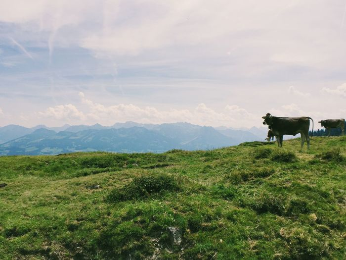 Alps Beauty In Nature Cloud - Sky Clouds Clouds And Sky Cow Day Field Grass Grassy Green Color Hiking Hikingadventures Idyllic Landscape Mountain Mountain Range Nature Nature Outdoors Panaroma Sky
