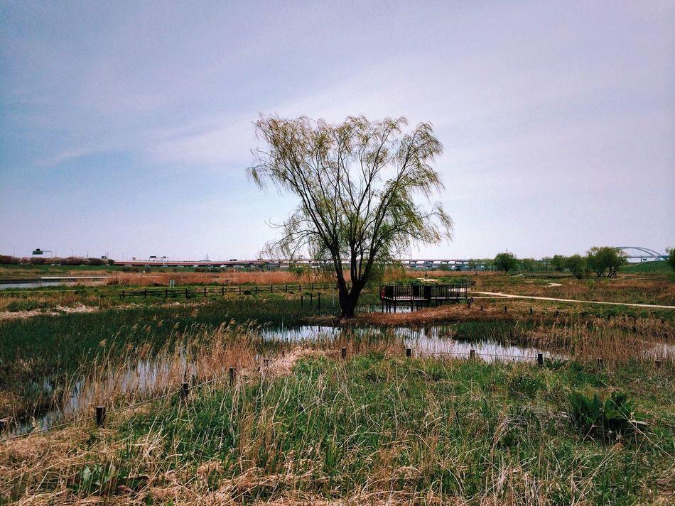 Beautiful stock photos of single, Calm, Cloud, Field, Flora