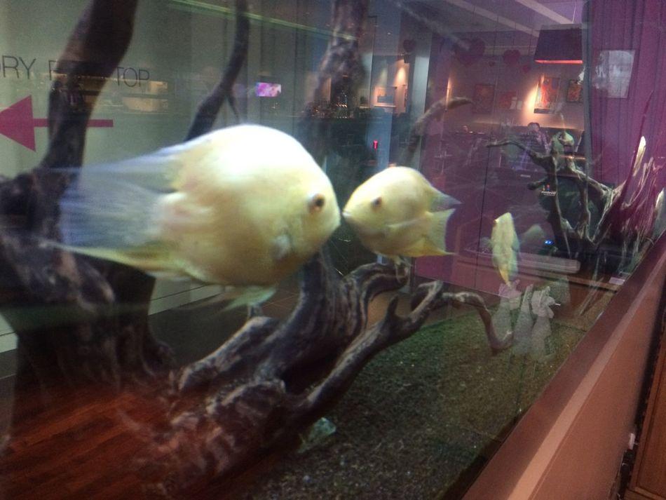 Fish tank at the ivory!