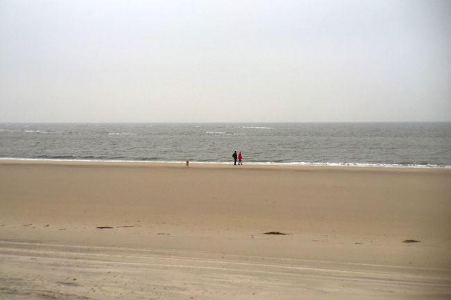 Dog Walking Beach Winter Amrum