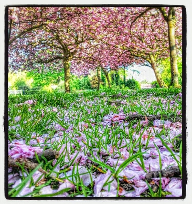 Walking Around Enjoying The Sun Getting In Touch Relaxing pink flowers