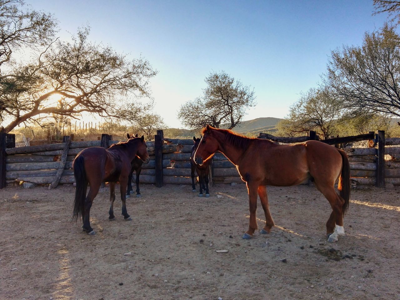 Horse Animal Themes Outdoors Animals In The Wild No People Nature Ranch Camping Horses Horse Riding Horse Photography  Sunlit Sunlight Sunset