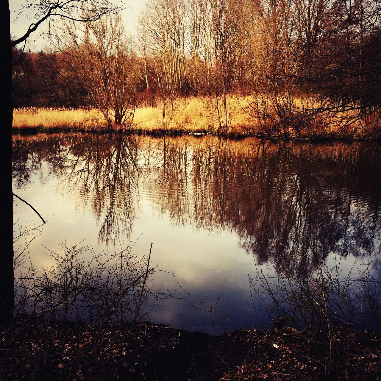 reflection, lake, nature, water, tranquil scene, tranquility, beauty in nature, scenics, no people, tree, outdoors, bare tree, sunset, day, sky, grass
