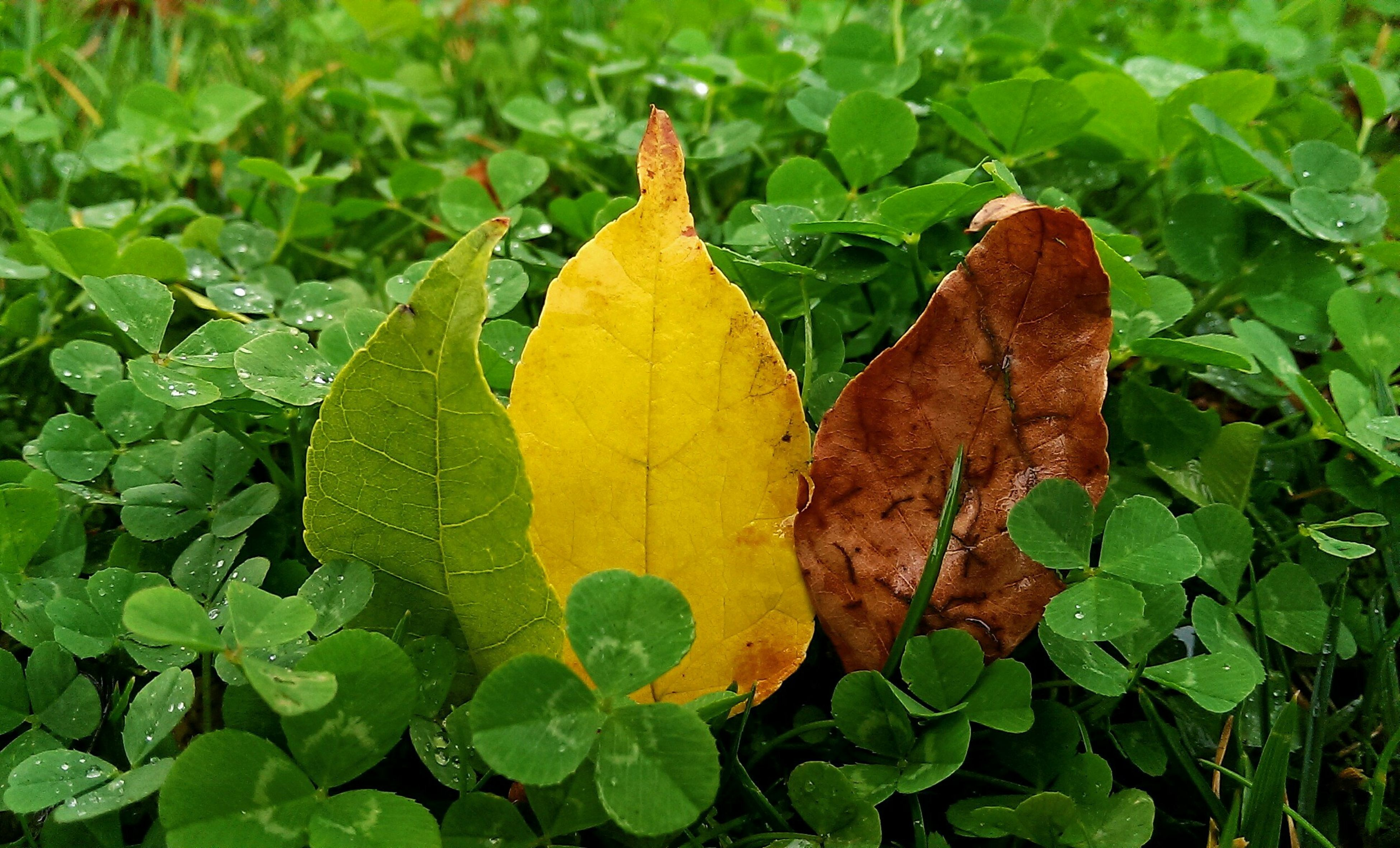 leaf, leaf vein, green color, close-up, natural pattern, growth, nature, leaves, plant, autumn, beauty in nature, yellow, change, tranquility, fragility, high angle view, season, day, focus on foreground, no people
