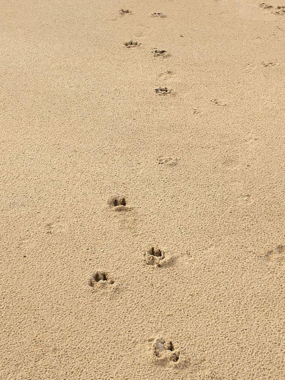 The Walks Dog Walking Dogwalk Sand Beach Beach Life