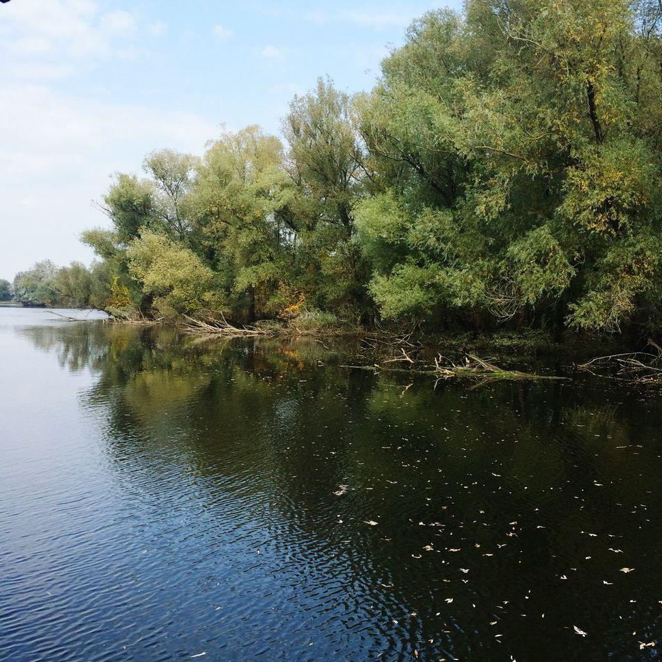 Reflection Tree Water Nature Kopački Rit