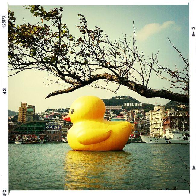 黃色小鴨 ,休憩於基隆河畔 。