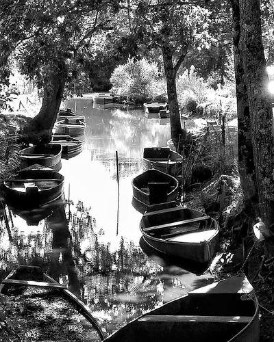 Boattrip Briere Bretagnetourisme Bretagne Parc Naturel Blackandwhitephoto Blackandwhite Photography Blackandwhite