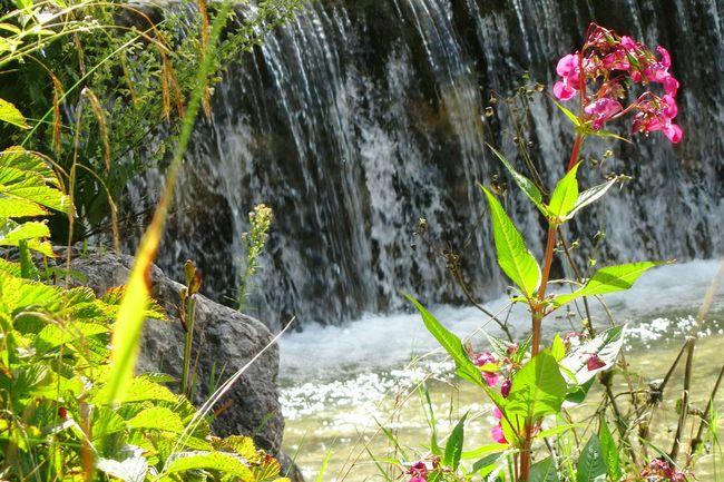 Wasserfall irgendwo im Chiemgau Waterfall Blumen,Blomster, Flower. Einzelne Blume Pink Flower Water And Flower Taking Photos Check This Out Hello World EyeEm Gallery EyeEm Nature Lover