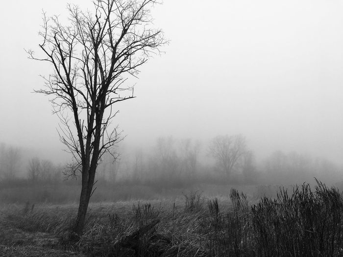Nature Tranquility Tranquil Scene Clear Sky Bare Tree Beauty In Nature Landscape Tree Scenics Hazy  No People Field Mist Outdoors Day Lone Branch Sky Blackandwhite Fieldscape Alone Depressing Day Foggy Morning Contrast
