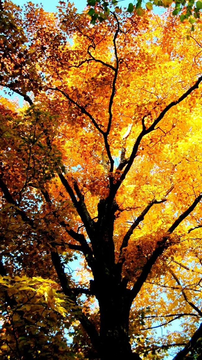Seasons Autumn Colorsonfire Tree Hugging A Tree Vermontbyvermonters Vermont_scenery