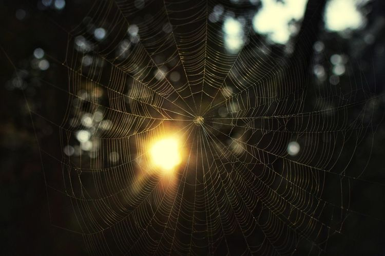 Sun in the web Spider Web Sunlight Sun Nature On Your Doorstep The Week On EyeEm Spider Web Focus On Foreground Web No People Nature Close-up Spider Outdoors Day Window Animal Themes Fragility Beauty In Nature
