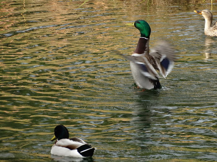 Animal Themes Animal Wildlife Animals In The Wild Bird Day Lake Nature No People Outdoors Water