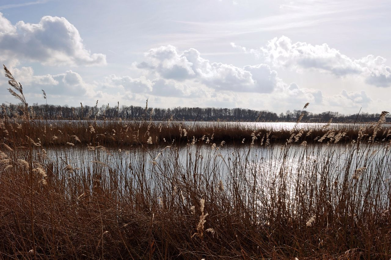 Reeds Lakeview Dutch Landscape Waterscape Sunset Silhouettes
