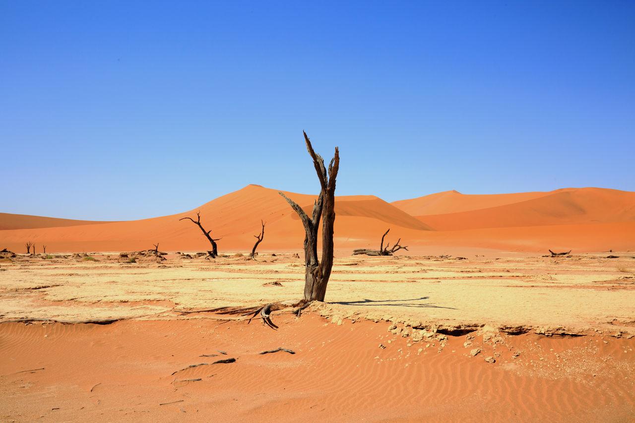 Bare Trees In Desert Against Clear Blue Sky