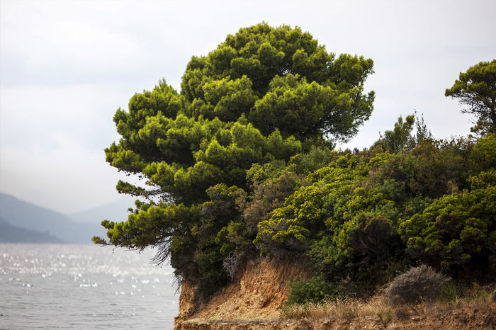 Beauty In Nature Branch Calm Cloud - Sky Day Greece Green Color Growth Idyllic Majestic Mediterranean  Mountain Nature No People Non-urban Scene Outdoors Remote Scenics Sea Sky Tranquil Scene Tranquility Tree Water Waterfront