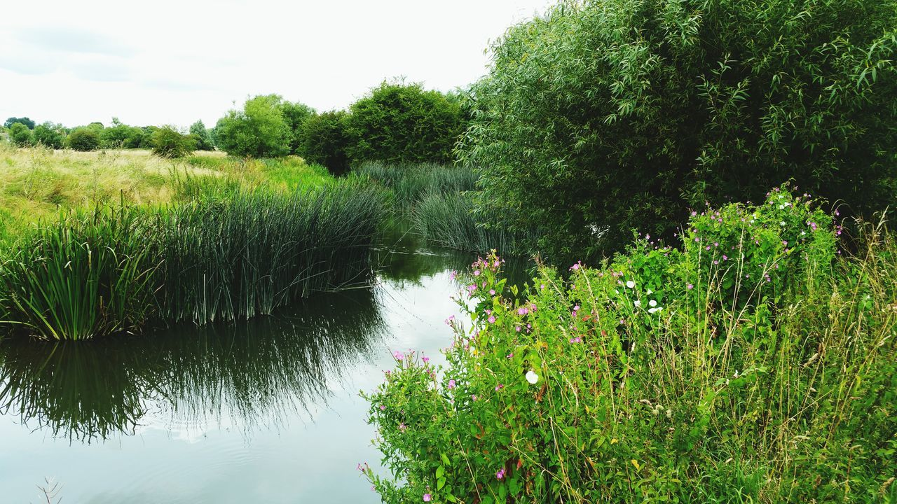 River River Ouse Taking Photos Showcase July 2016 Samsung Galaxy Note 4 Samsungphotography Relaxing Nature Reeds Beauty Beautful Nature Pretty Field Sky Hidden Gems