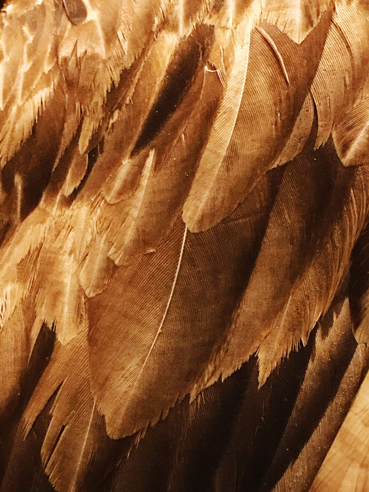 Backgrounds Feather  Textured  Full Frame No People Nature Day Close-up Outdoors