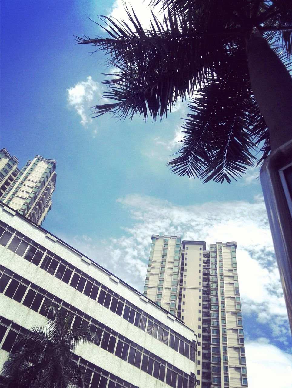 skyscraper, low angle view, architecture, palm tree, modern, tall, sky, city, growth, tree, no people, building exterior, day, outdoors