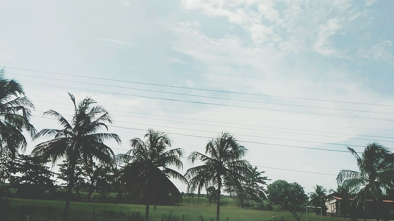 Another shot while heading to my village. My Village Hometown Scenery On The Way To... Fresh Scent Nature_collection Naturelovers Nature Photography On My Point Of View Enjoying The View Paddy Field Paddy #green Kota Belud Bajau I Love My City See U Soon Eid Mubarak 2016 Lovelynatureshots Nice Views EyeEmbestshots EyeEm Gallery EyeEm Team EyeEm Nature Lover Coconut Trees Everywhere