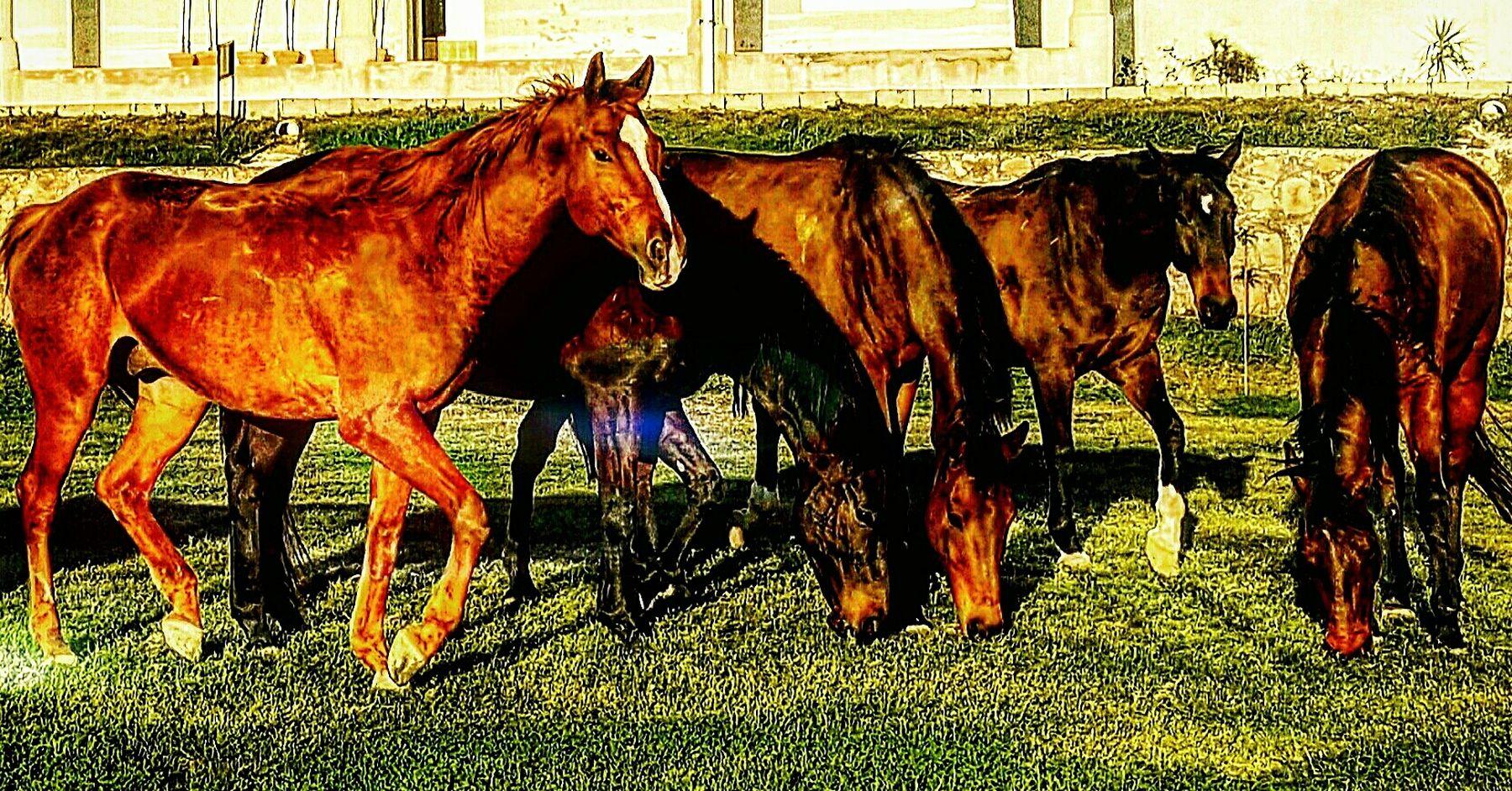 Majestic strength. No Saddle Horses First Eyeem Photo